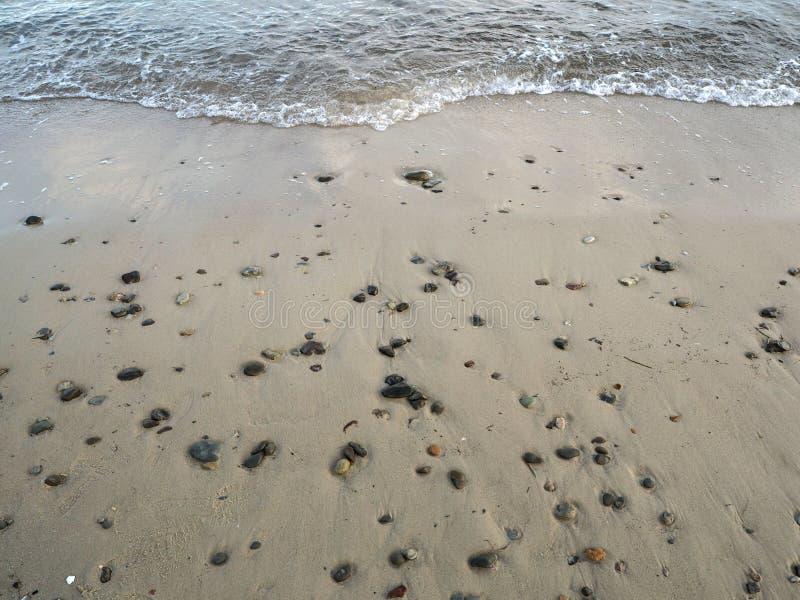 Den Östersjön kusten royaltyfria bilder