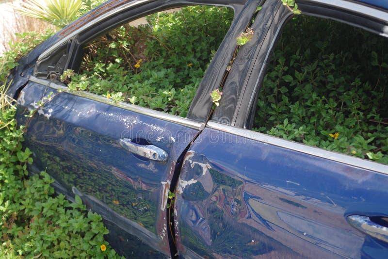 Den övergav bilen som följer en olycka och nu täckte det s, med vegetation royaltyfri fotografi