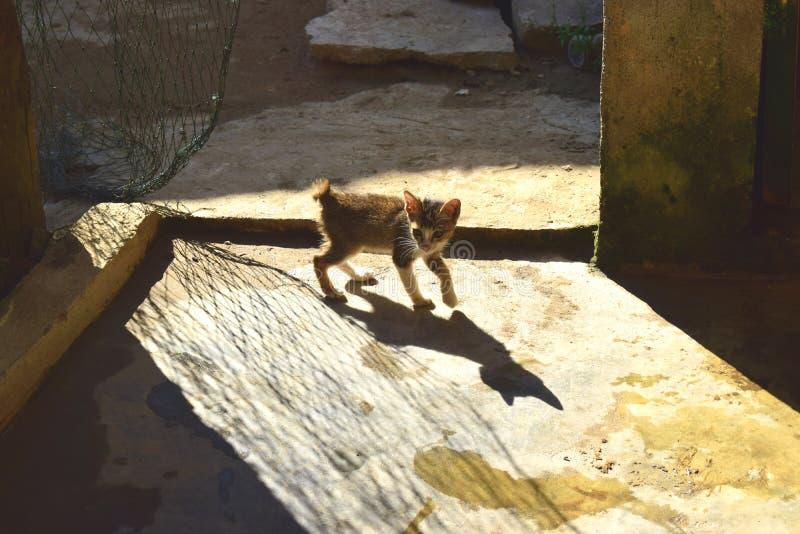Den övergivna kattungen och skuggan fotografering för bildbyråer