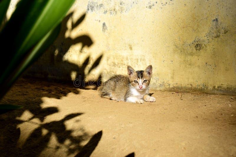 Den övergivna kattungen såg så sorglig ut arkivfoto