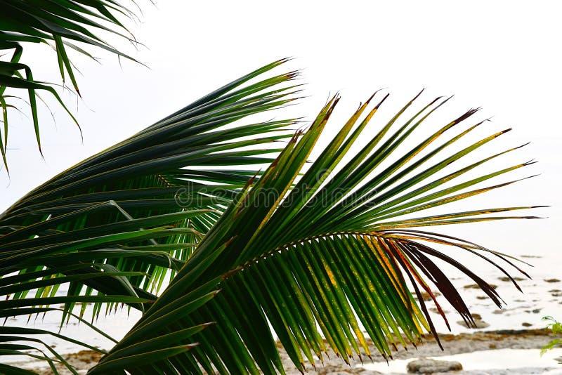 Den abstrakta modellen vid den gröna palmträdet lämnar - nära övre - naturlig bakgrund royaltyfri foto