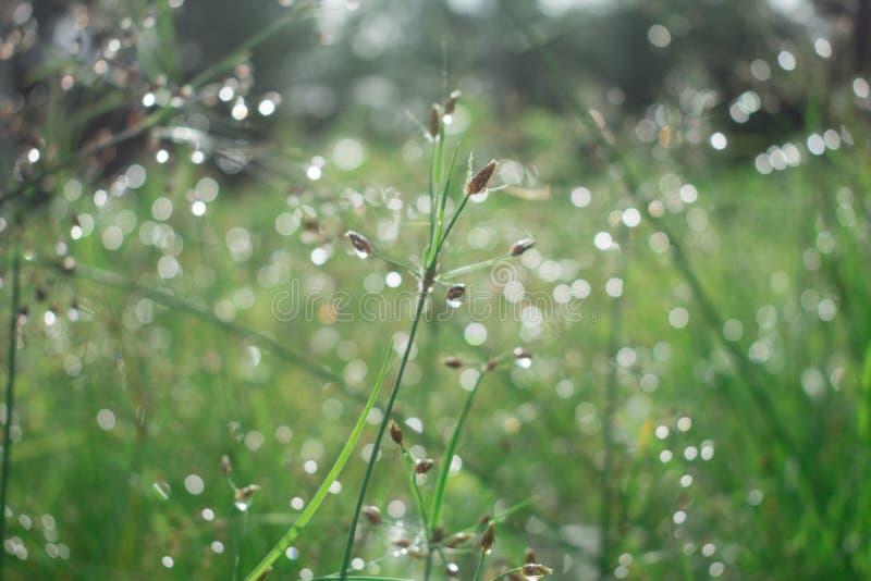 Den abstrakta naturen, gör grön sorten av gräs, några i skärpa, vilar in arkivbild