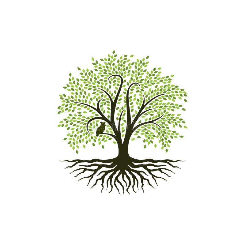 Den abstrakta trädlogodesignen, rotar vektorn - träd av inspiration för livlogodesignen vektor illustrationer