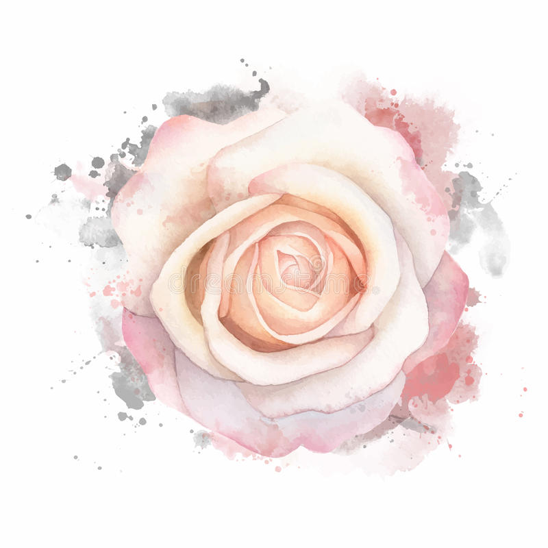 Den abstrakta vattenfärgen steg på vit bakgrund Illustration för vattenfärggrungemålning royaltyfri illustrationer