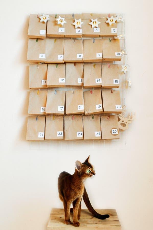 Den Abyssinian katten väntar på adventkalendern för jul Lynnebräde med gåvor och stjärnagirlanden royaltyfri fotografi