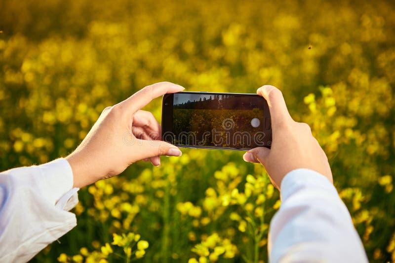 Den agronomkvinnan eller bonden kontrollerar kvalitet av canolafältet och tafotoet med mobiltelefonen royaltyfri bild