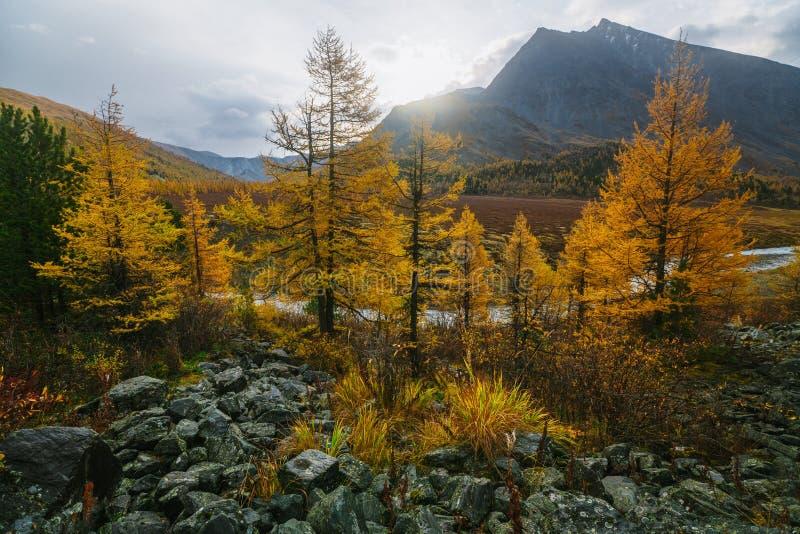 Den Akkem dalen i naturliga Altai berg parkerar arkivfoto