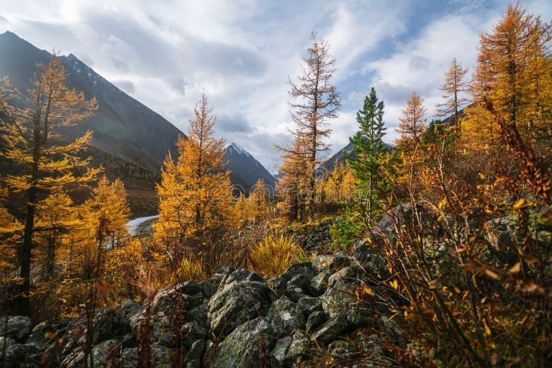 Den Akkem dalen i naturliga Altai berg parkerar arkivfoton