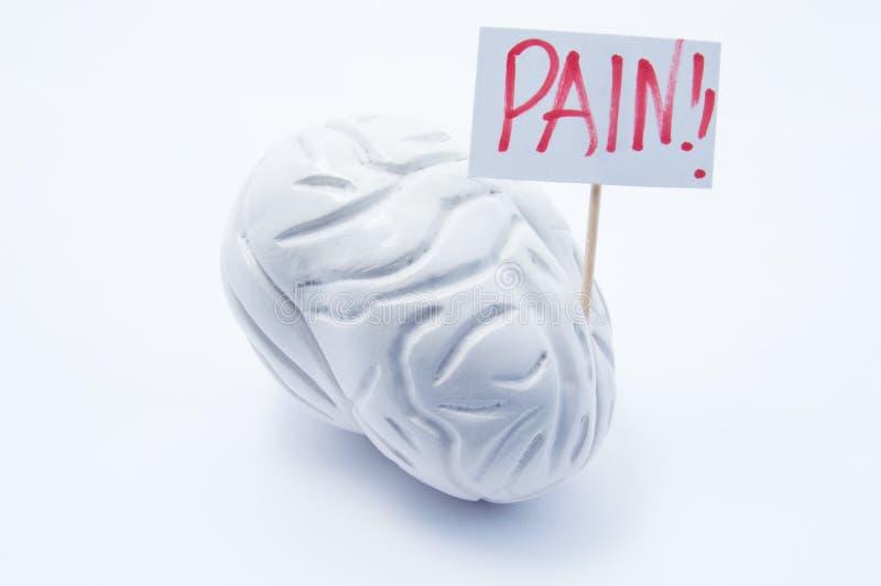 Den anatomiska modellen av hjärnan med plakatet med inskriften smärtar är på vit bakgrund Begreppsfotoet av huvudvärken smärtar t royaltyfri bild