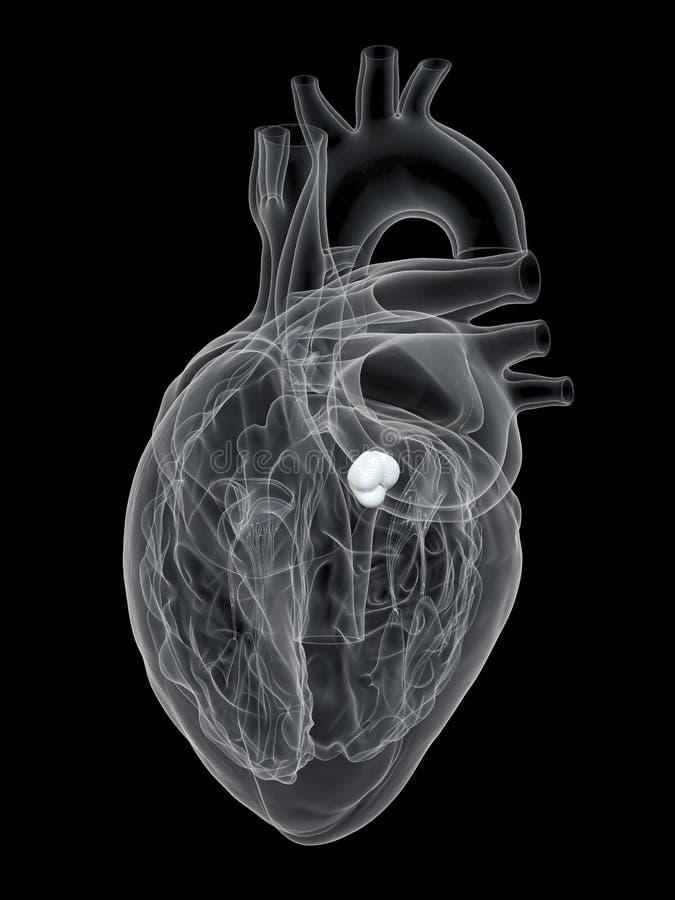 Den aorta- ventilen royaltyfri illustrationer