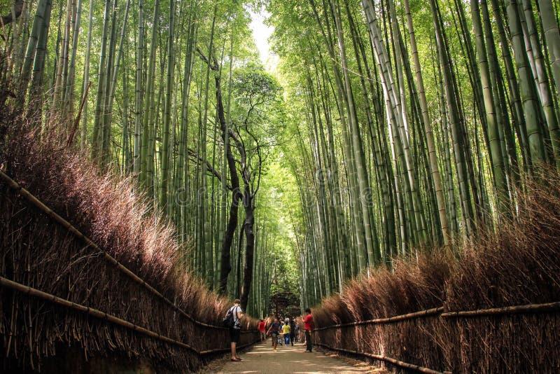 Den Arashiyama bambudungen, kyoto, kansai, Japan arkivbilder