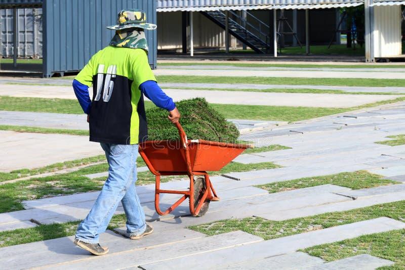 Den arbets- trädgårdsmästareWorker mannen, bönder är spårvagnen rullade kärran med gräsrulle för garneringträdgårdgolvet, gräsrul royaltyfri bild