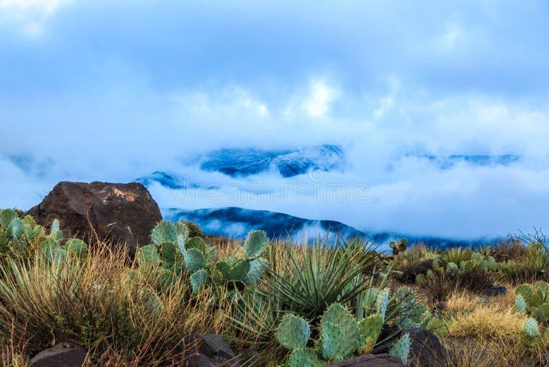 Den Arizona kaktuns, ökenväxter och vaggar på kullen; moln, kulle och insnöad backround royaltyfri fotografi