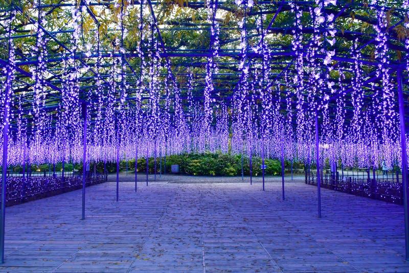 Den Ashikaga blomman parkerar, Tochigi, Japan royaltyfri bild