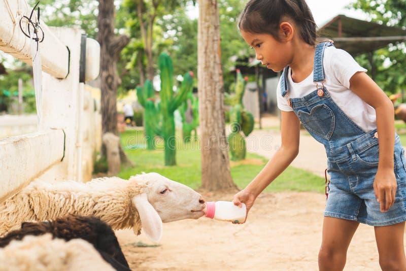 Den asiatiska barnflickan matar en flaska av mjölkar till det lilla lammet i zoo royaltyfria bilder