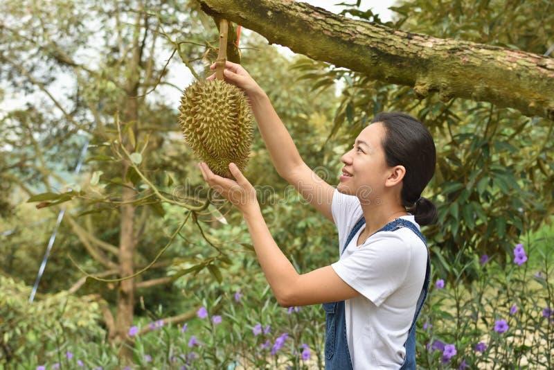 Den asiatiska durianen för kvinnabondeinnehavet är en konung av frukt i Thailand royaltyfria bilder