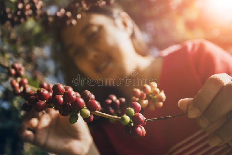Den asiatiska kvinnan som ler framsidalyckasinnesrörelse nära rått kaffe, kärnar ur på trädfilial arkivbild
