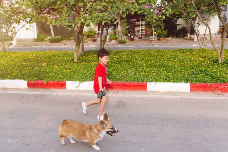 Den asiatiska pojken går med pembrokecorgivalpen royaltyfria foton