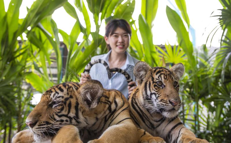 Den asiatiska unga kvinnan fångar tigersvansen royaltyfria foton