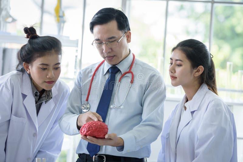 Den asiatiskt l?raren har undervisning till studenten om vetenskap och anatomiskt i laboratorium royaltyfri fotografi