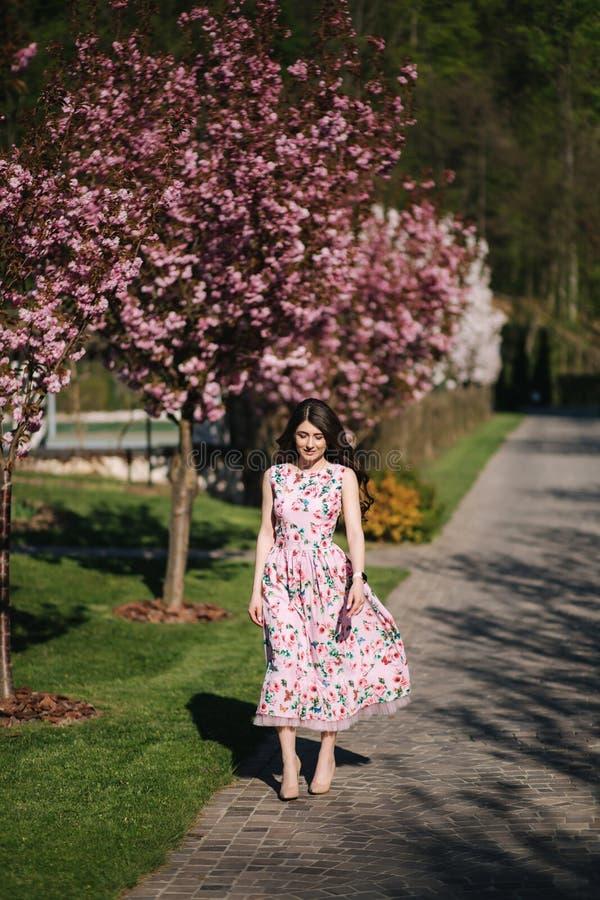 Den attraktiva unga flickan som ?r walkin i, parkerar propert det rosa tr?det Sakura Tree arkivfoton