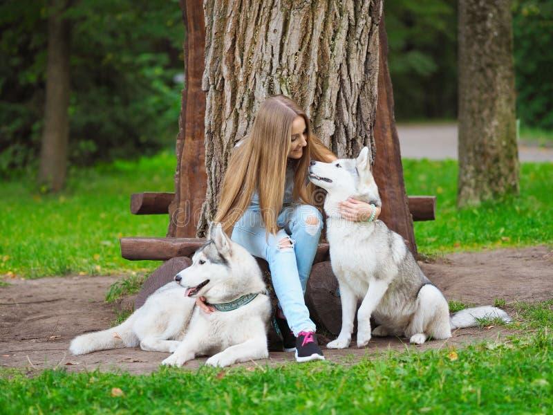 Den attraktiva unga kvinnan sitter på bänken med två roliga siberian skrovliga hundkapplöpning royaltyfria foton