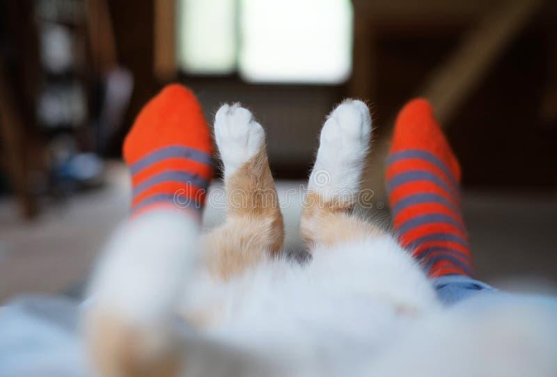 Den avkopplade gulliga katten som ligger på den mänskliga `en s, lägger benen på ryggen royaltyfri bild