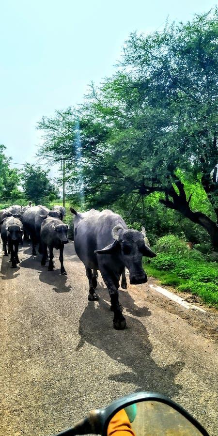 Den bästa bilden från Indien arkivbilder