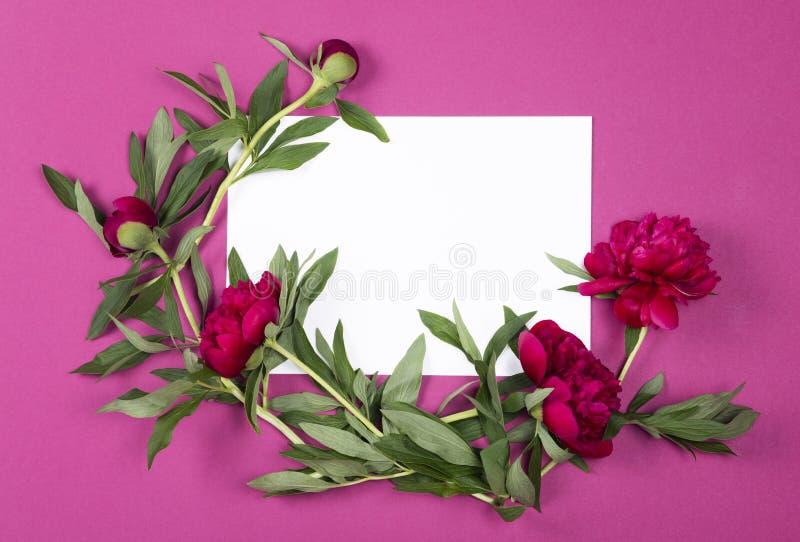 Den bästa sikten av arket av papper med pioner blommar på rosa bakgrund med kopieringsutrymme arkivfoto