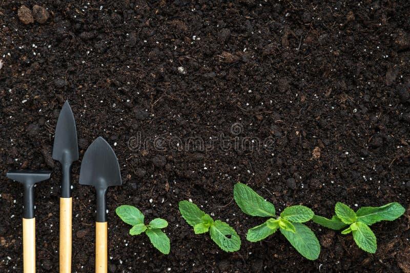 Den bästa sikten av fastställda arbeta i trädgården hjälpmedel, krattar, skyfflar och små gröna lövrika växter på svart jordjordn arkivbilder