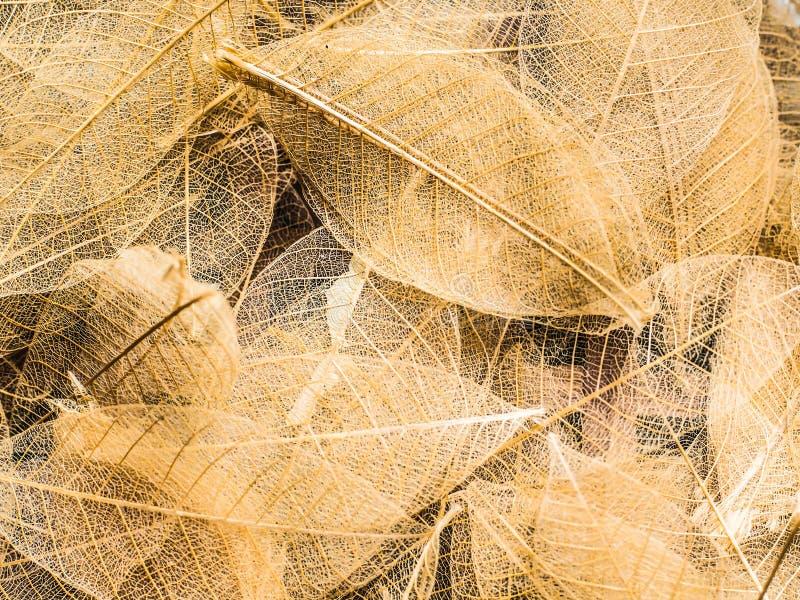 Den bästa sikten av den härliga dekorativa skelett- stordian lämnar härlig idé för texturnaturbegrepp arkivfoto
