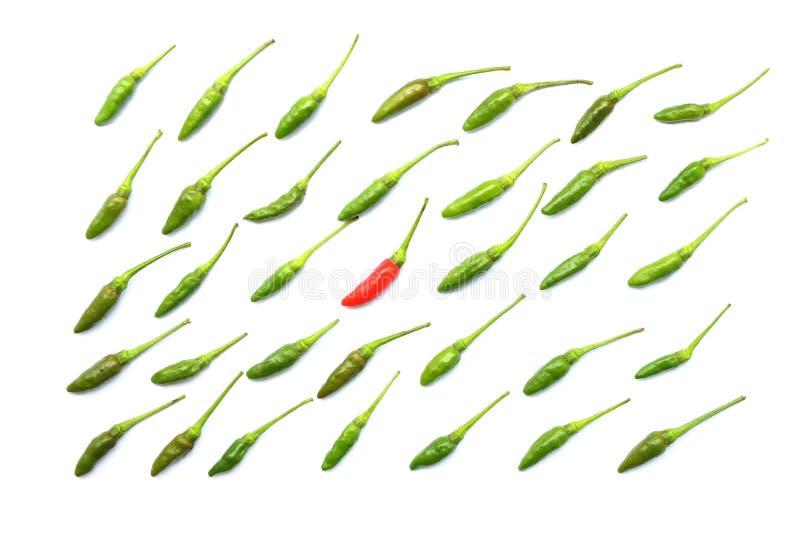 Den bästa sikten av den isolerade gröna nya thailändska chili som är ordnad i propra rader har förbi, den röda chili i mitt på vi royaltyfri foto