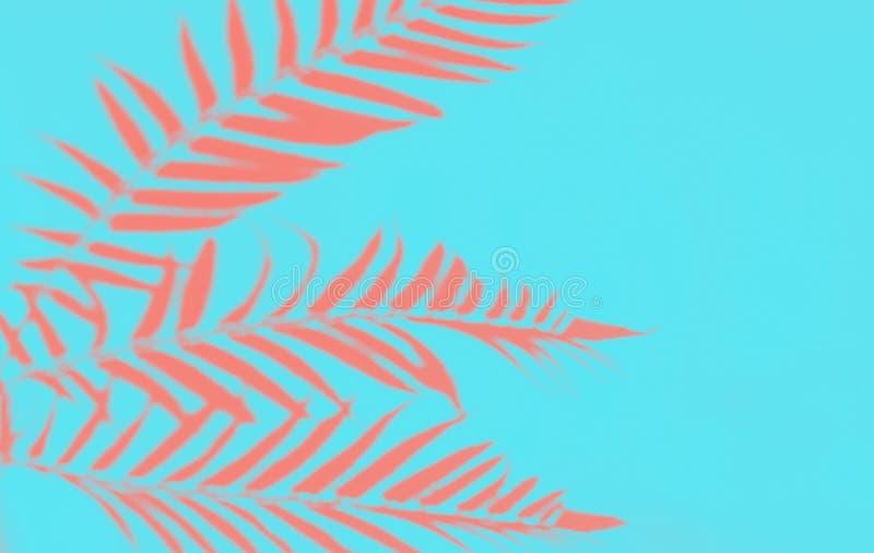 Den bästa sikten av tropiska palmblad för korall skuggar på blå bakgrund arkivbilder