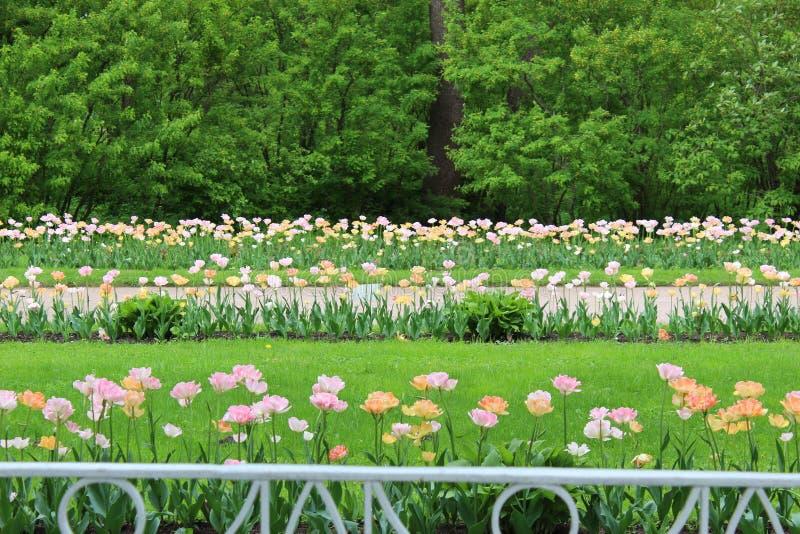 den bästa tidutgiftervåren i staden är blomma parkerar arkivbild