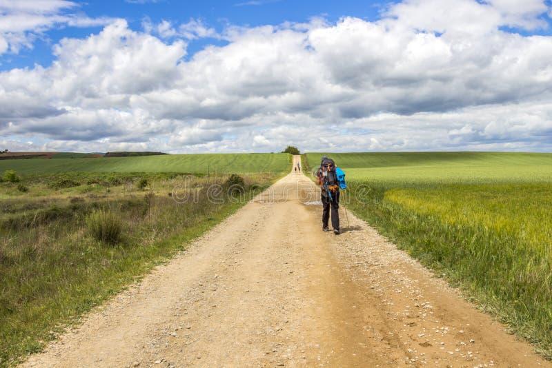 Den bakre sikten av en man vallfärdar, den unpaved landsvägen på vägen av St James, Camino de Santiago i La Rioja, Spanien royaltyfria bilder