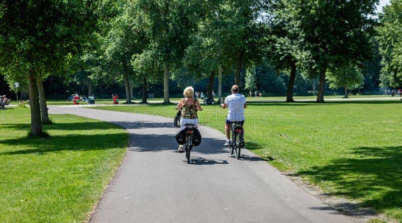Den bakre sikten av ett moget par som rider cyklar i en stad, parkerar royaltyfri foto