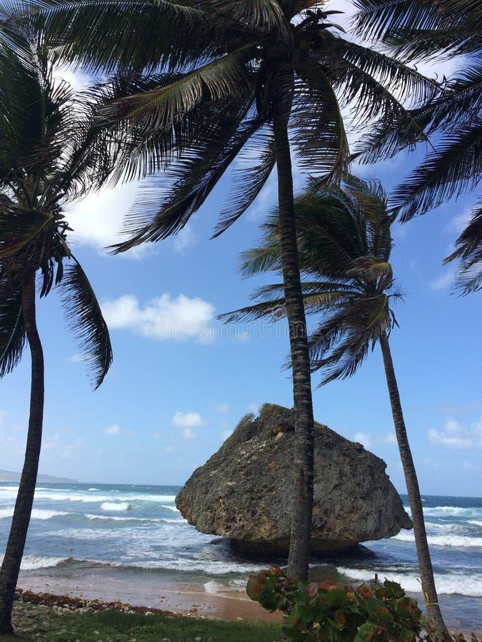 Den Barbados stranden med palmträd och stora vaggar royaltyfri foto