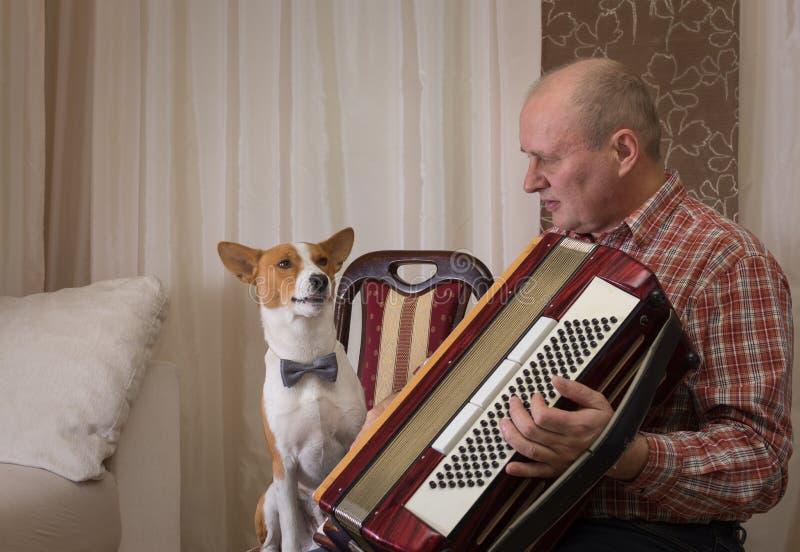 Den Basenji hunden och den mogna musikern med dragspelet förbereder sig att utföra att lära ny sång royaltyfria foton