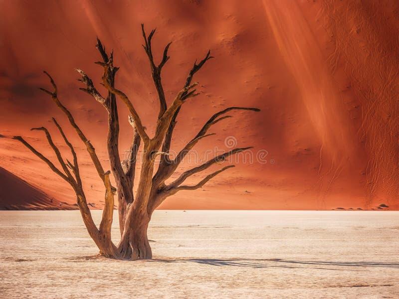 Den behagfulla formen av ett trädskelett i Deadvlei, Namibia royaltyfri foto