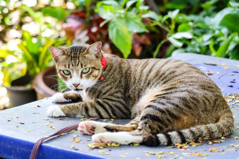 Den Bengal katten kopplar av på den blåa behållare och blomman i trädgård royaltyfri foto