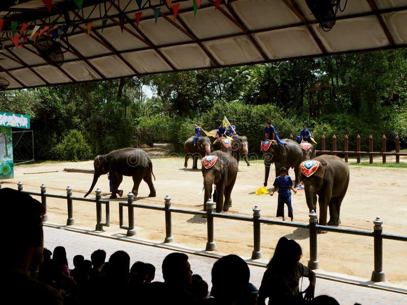 Den berömda elefantshowen i Thailand arkivbild