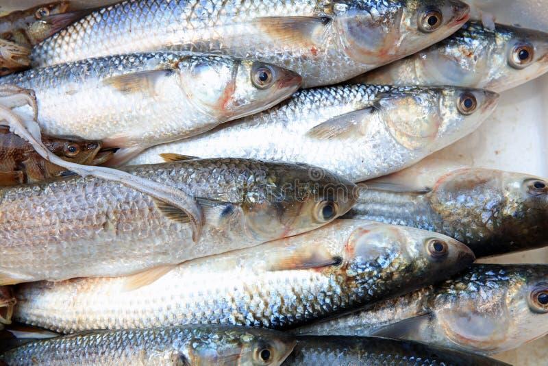 Den berömda Fishmarketen i Catania sicily italy royaltyfri foto