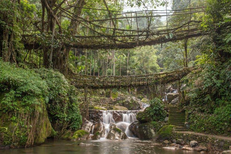 Den berömda uppehället för den dubbla däckaren rotar bron nära den Nongriat byn, Cherrapunjee, Meghalaya, Indien royaltyfria foton