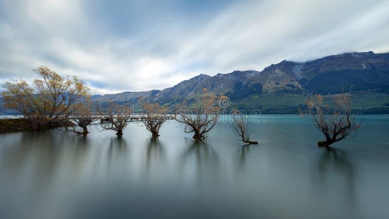 Den berömda Willow Trees av Glenorchy arkivbilder