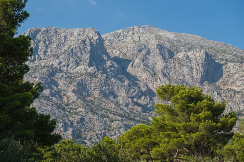 Den Biokovo bergnaturen parkerar och träd från Makarska Riviera, Dalmatia arkivbilder