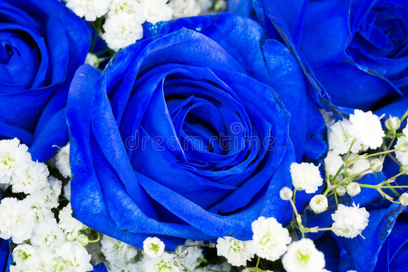 den blåa buketten blommar ro royaltyfri fotografi