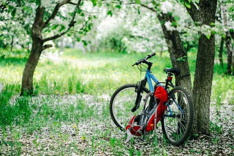 Den blåa cykeln står på det blommande äppleträdet arkivbild