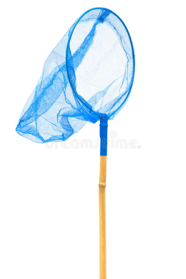 den blåa fjärilen förtjänar royaltyfri foto