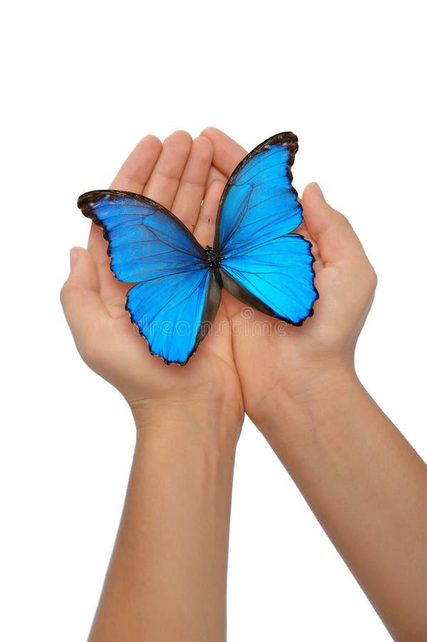 den blåa fjärilen hands holdingen arkivfoto