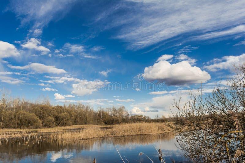 Den blåa sjön, himlen reflekterar yttersidan av vattnet med vita moln, på horisonten en torr vass, och skogen växer arkivfoton